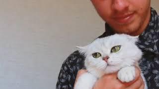 Кошка любит хозяина!