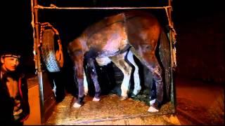 Skaryszew WSTĘPY, łamanie praw zwierząt na targu