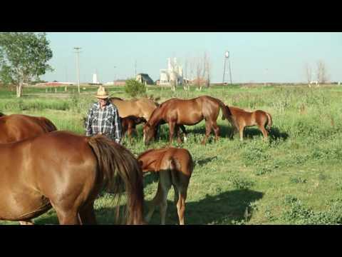 CBA Majors: Agribusiness