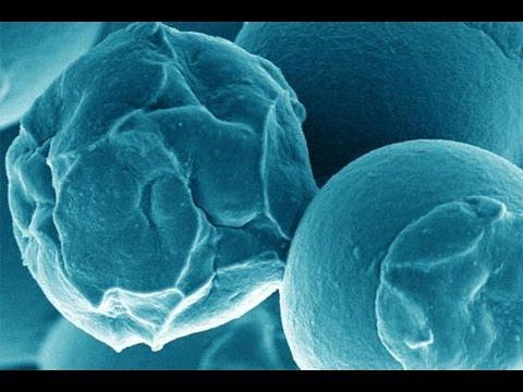 Science Cafe - Biophotonics