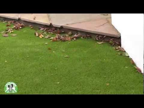 LazyLawn ® - How to care for your Artificial Lawn