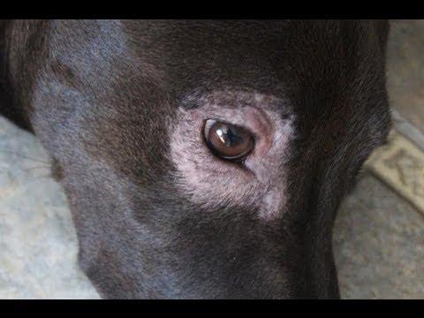 Mange Mites - on my puppy - The Lighthouse Lady - YouTube