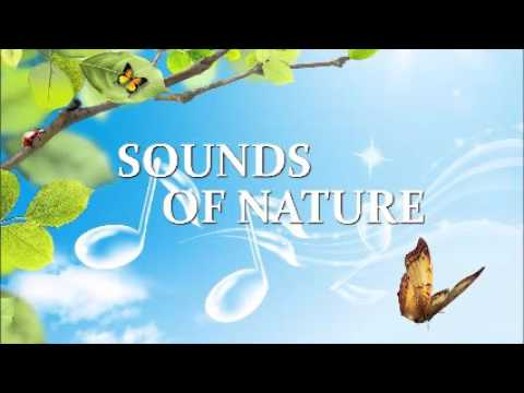 Pure Binaural Beat - Theta Waves 7.5 Hz (creative thought for art, invention, music)