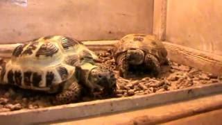 """Зоотеррариум Выставка экзотических животных """"Мир тропиков"""". Идем смотреть рептилий"""