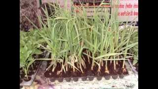 Propagation Trays Celled Trays Plug Trays Nursery Propagation Seeder Trays
