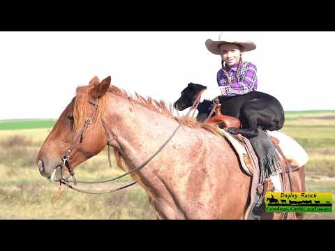 Cowgirl and Cowdog take Cattle on 2 mile Cattle Drive