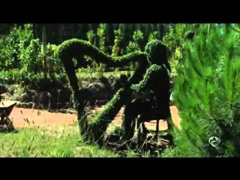 el bosque encantado san martn de en noticias de antena youtube