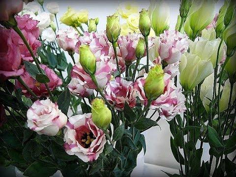 Эустома, Ирландская роза,  Лизиантус,  Сеем Эустому  Невероятно красивые цветы