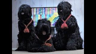 Парк для собак в США. Наши питомцы.