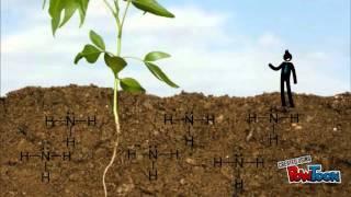 the development of clover plants using nitrogen fixation