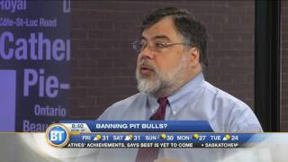 Should pit bulls be banned? The BT panel debates
