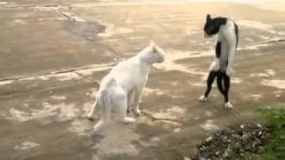 Кот, познавший тайны восточных единоборств ....