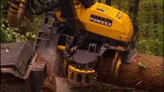 Die Holz Ernter in Sekunden fallen die Bäume Reportage