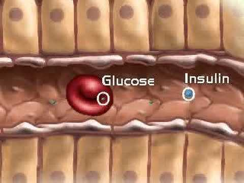 Endocrine System, Pancreas - YouTube
