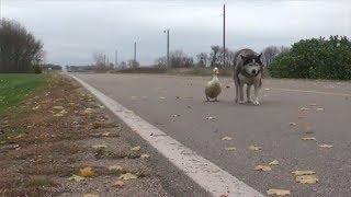 親友の同居犬に先立たれてしまった犬。その悲しみを癒した、 意外な存在...