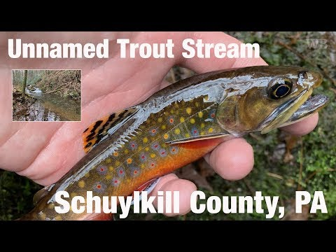 WB - Unnamed Trout Stream, Schuylkill County, PA - January '19