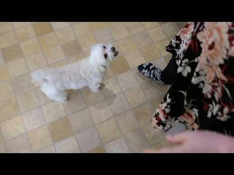 Toby the Maltese Dog - Panasonic DMC-LX15 Test Footage