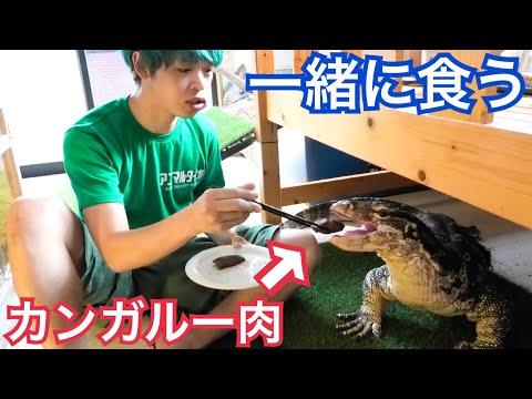 テン君と一緒にカンガルー肉を食べてみた結果...!!!