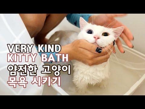 얌전한 고양이 목욕 VERY KIND CAT ON BATH