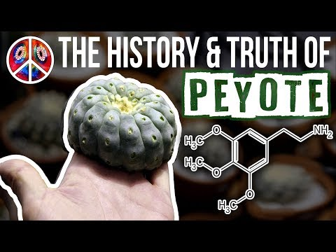 PEYOTE | The History & Truth Of Mescaline