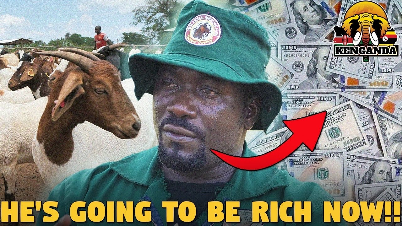 Download He Stopped Being a Doctor To Become One Of The Largest Goat Breeders in UGANDA @Hamiisi Semanda