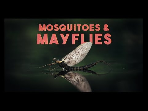 Mosquitoes & Mayflies | EP3 | Fly Fishing Finnmark