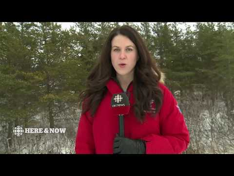 CBC NL Here & Now Tuesday November 21 2017