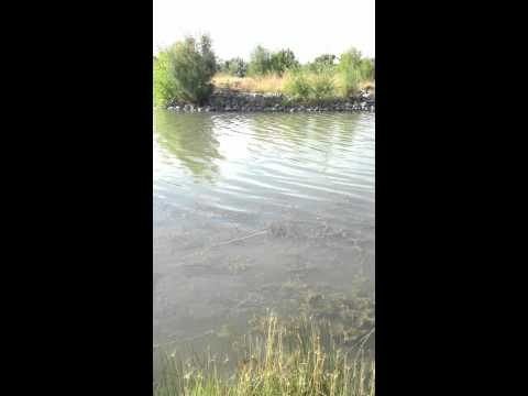 Fishing At Isleta Lakes