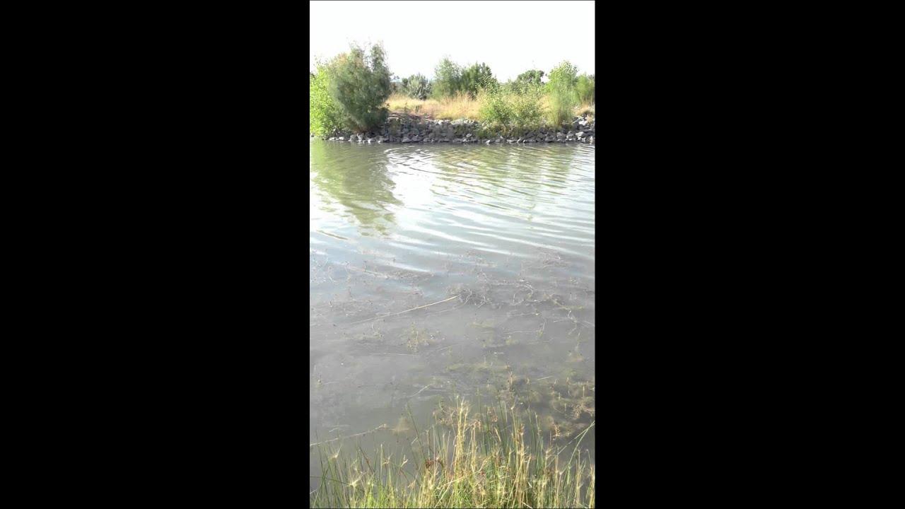 Isleta fishing