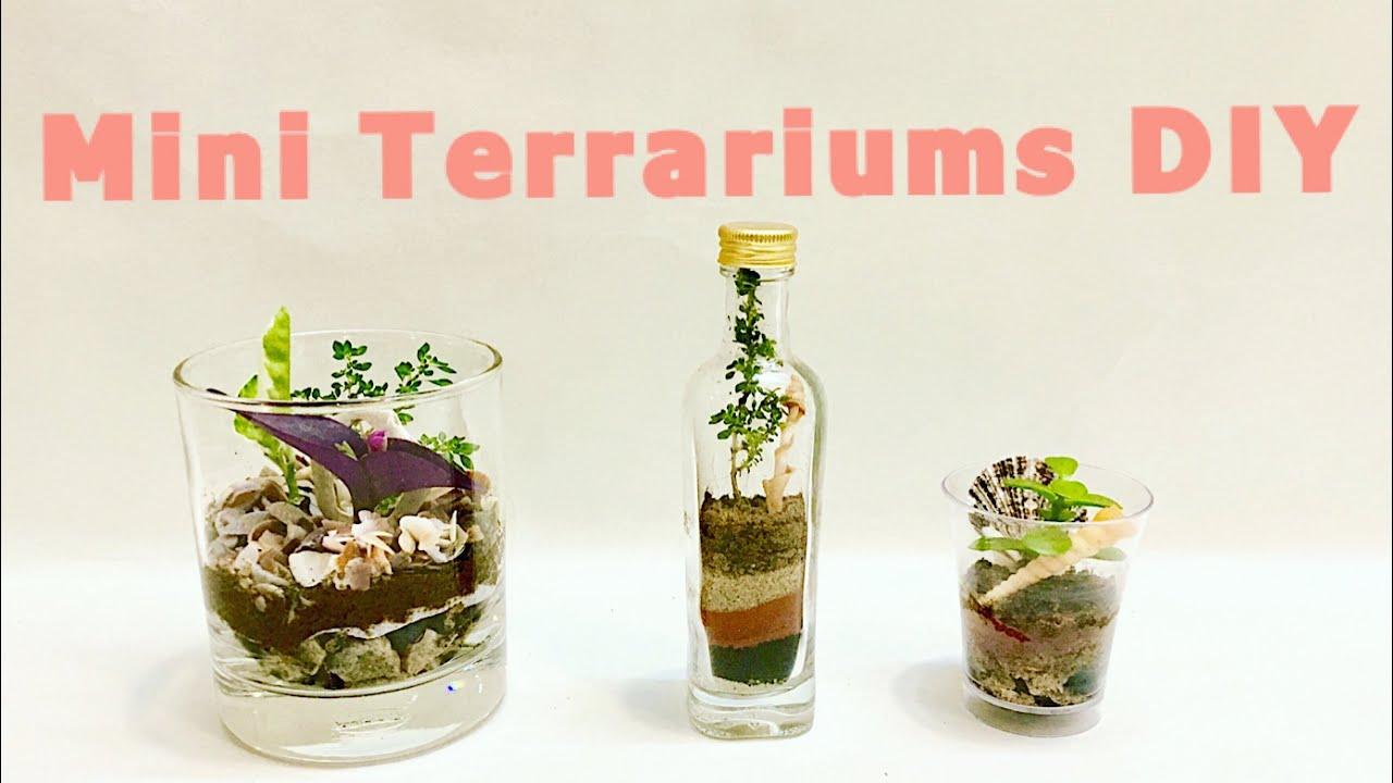 Diy Terrarium By Indian Plants Mini Garden In Bottle Glass Cup