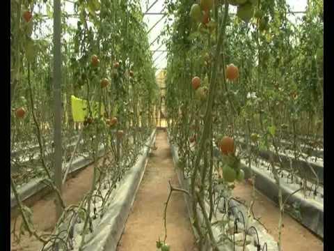 Farming in Qatar - الزراعة في قطر