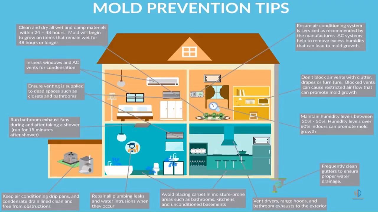 How To Prevent Mold In Your Home: Proven Mold Prevention