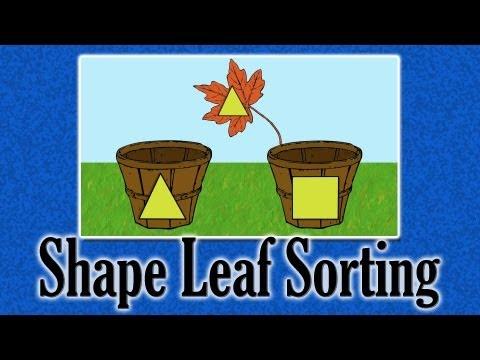 Shape Leaf Sorting | learning video for children
