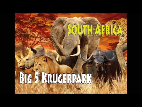 Big Five Krugerpark South Africa Safari