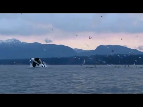 Discover Vancouver Island Bc, Breathtaking Tourism Video