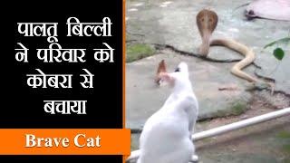 Bhubaneswar Update| बिल्ली ने परिवार को जहरीले कोबरा से बचाया | Viral Video from Odisha