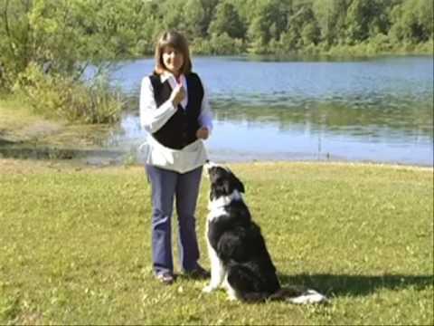 Pamela Dennison Training the Whistle Recall DVD CLIP - DTB1100