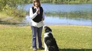 Pamela Dennison Training the Whistle Recall