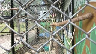 Попугаи в минском зоопарке.(, 2014-07-23T16:20:25.000Z)