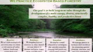 Monetizing forest ecosystem services
