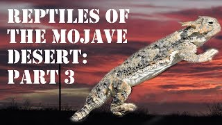 Reptiles of the Mojave Desert Part 3, Herping