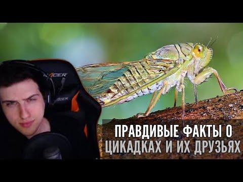 Hellyeahplay смотрит: Правдивые факты о цикадках и их друзьях (Озвучка Rumble)