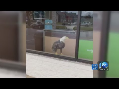 Lynch and Taco - The Eagle Has Landed...Inside H&R Block
