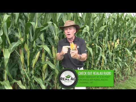 Corn School -   Gibberella