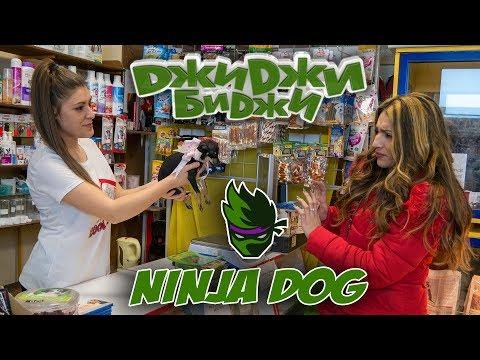 ДжиДжи БиДжи - Куче нинджа