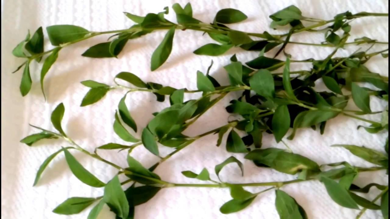 Как вывести камни и песок из почек: лекарства, травы и народная медицина