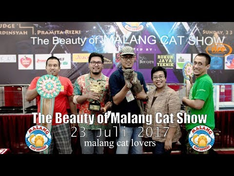 The Beauty of Malang Cat Show 23 Juli 2017 ~ malang cat lovers