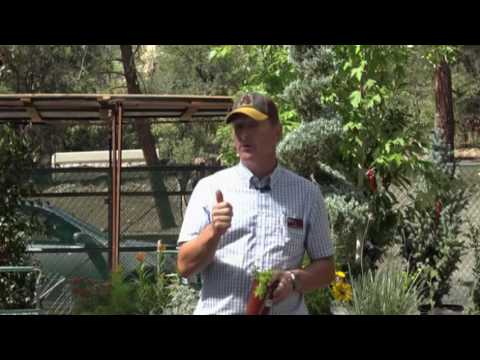 Garden Class   Herb Garden Designs From Beginner To Pro