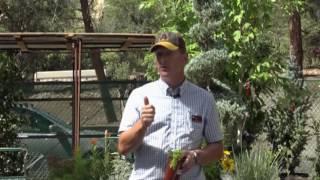 Garden Class - Herb Garden Designs from Beginner to Pro