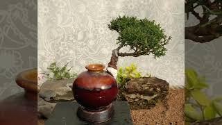 도자기랑 나무랑 탐방(3)